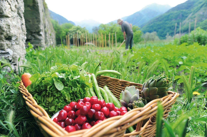 Alimentation saine : voici 5 bonnes raisons de manger bio !