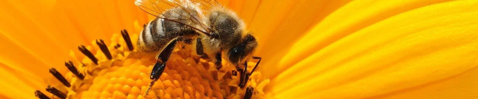 Pourquoi mettre du miel dans vos assiettes ?